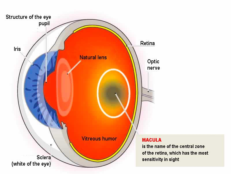 MACULAR DEGENERATION (AMD)